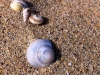 h-comm_maggie-oneill_sea-shells